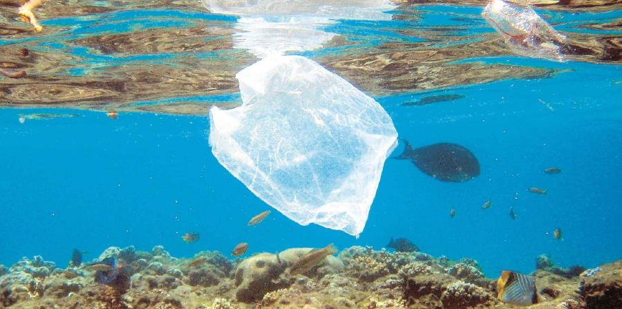 New York is the third state of the United States. in banning plastic bags