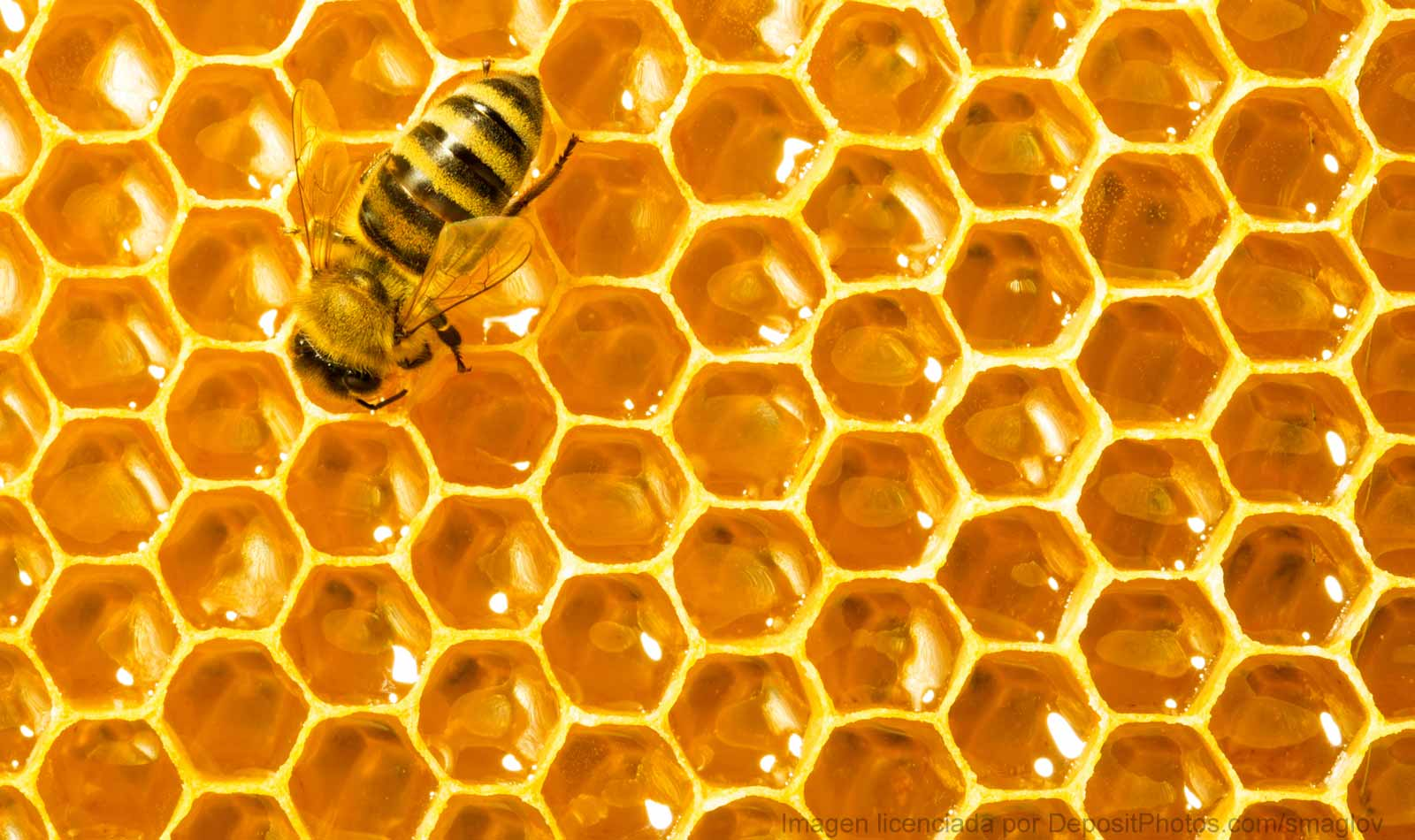 In Your Healthy Diet You Can Not Miss This Royal Jelly